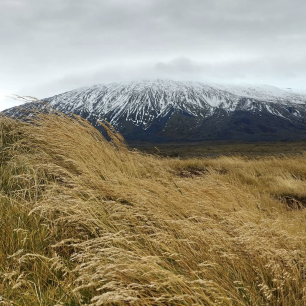 Under a cloudy sky is a broad, dark gray mountain with snow texturing the upper slopes. In the foreground, tall gold grass waves in front of a broad plain.